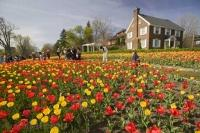 The carpets of tulips in Ottawa during the annual Tulip Festival are worth planning to see during travel to Ontario, Canada.