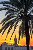 A tropical scene as a vivid sunset lights the evening sky behind the Triana District in the City of Seville, Andalusia in the South of Spain, silhouetting a palm on the eastern bank of Rio Guadalquivir.