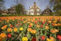Many varieties of colours of tulip flowers grace the grounds at Commissioners Park in Ottawa, Ontario, Canada.