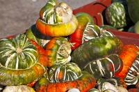 Turban Squash Vegetables Fall Season