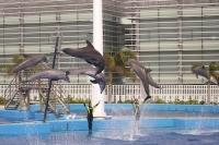 Valencia Spain Aquarium Dolphins