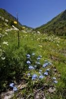 Different colors of flowers fill the meadow in the Val D Aran near Cascade de Sauth deth pish in the Pyrenees in Catalonia, Spain in Europe.