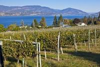 The beautiful Okanagan Valley is a prime location for growing grapes for wines. The landscape is varied with lakes and rivers, vineyards and towns.