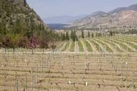 The Okanagan Valley is a highly productive growing region for British Columbia, and popular travel destination for vacationers to Canada.