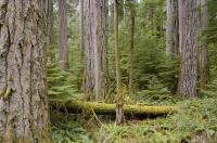 Vancouver Island Forest
