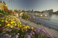 Victoria Harbour Flower Beds