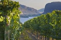 Scenic Vineyard Grapevines Lake View