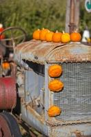 A funny picture of an old vintage tractor adorned with squashes and pumpkins at a produce stall in the town of Keremos in the Okanagan-Similkameen region of British Columbia, Canada.