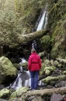 A woman views the Merriman Falls waterfall near Quinault Lake in the Olympic National Park of Washington, USA.