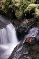 Forest Water Cycle Fall Photo
