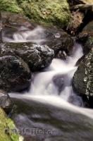 A dynamic picture of flowing water at Merriman Falls near Quinault Lake on the Olympic Peninsula of Washington, USA.