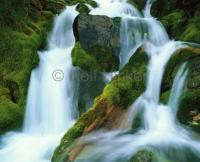 Green Moss Waterfall Picture
