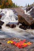 As Autumn leaves change the color of the landscape of Lake Superior Provincial Park in Ontario, Canada, the swift rapids flow from the waterfall above.