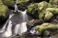 The Merriman Falls in the Olympic National Park of Washington would make a beautiful waterfall poster picture.