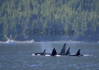 Wildlife tours are available from Port Hardy on Northern Vancouver Island in British Columbia including bear or whale watching.