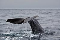 Whale Watching Trips Kaikoura New Zealand