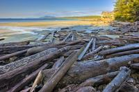 Wickaninnish Beach is no stranger to driftwood as this picture clearly demonstrates. Due to the movement of the waves on the West Coast of Vancouver Island, driftwood often washes up on this beach.