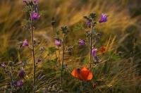 A beautiful natural arrangement of wild flowers along the side of the road in Aragon, Spain.