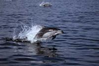 The best way to see dolphins is in the wild in the waters surrounding Vancouver Island in British Columbia, Canada.