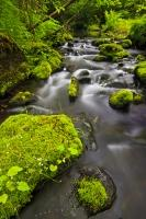 A small creek set in the wilderness of Northern Vancouver Island, flows past a series of moss covered rocks in the lush green forest.