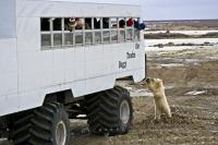 Tourism has become very popular around Churchill, Manitoba as visitors love to be able to encounter the wildlife in the area, especially a Polar Bear.