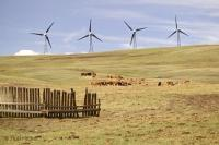 Wind Power Creation Farmland Cows