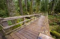 Cathedral Grove Boardwalk Vancouver Island