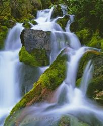 Nature Flowing Water Waterfall Moss