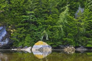 photo of Great Bear Rainforest Reflections