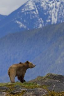 photo of Mighty Grizzly Bear