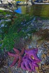 photo of Starfish Great Bear Rainforest