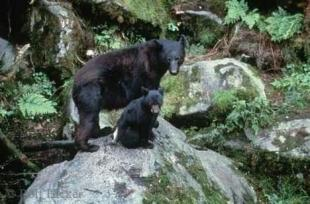 photo of Black Bears Sitting on Rock