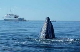 photo of Baja California Tours