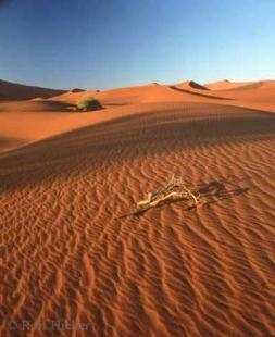 photo of Namib Desert Africa Vacation