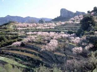 photo of Blooming Almond Trees