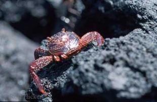 photo of crab pictures
