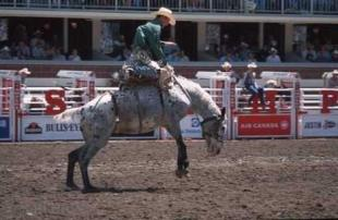 photo of Calgary Stampede Rodeo Photo