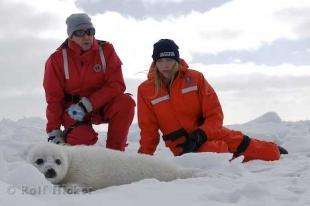 photo of Animal Rescues Paul And Heather McCartney Baby Harp Seal