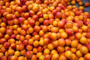 photo of Apricots Fruit Central Otago South Island New Zealand