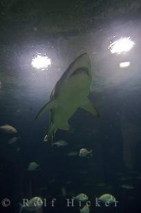 photo of Aquarium Shark
