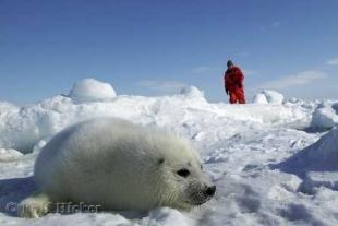 photo of Arctic Seals Tours
