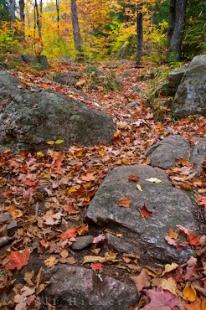 photo of Autumn Scenery Ragged Falls Trail Ontario Canada