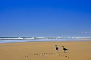 photo of Ripiro Beach Picture Seagulls Tasman Sea New Zealand