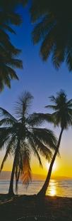 photo of Panorama Palm Tree Beach Sunset Dominican Republic