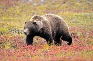photo of Bear Pictures