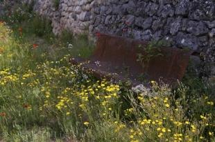 photo of Wildflowers Bench Rest Provence France Village