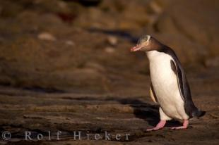 photo of Penguin Bird Watching Sights