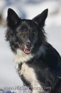 photo of Picture Of A Cute Border Collie Dog