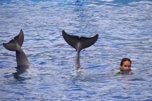photo of Bottlenose Dolphins Tail Flukes Valencia Aquarium