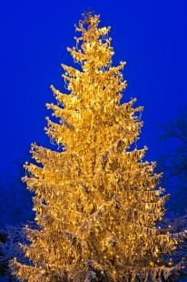 photo of Bright Christmas Tree Picture